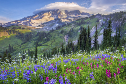 Hike wildflower trails in Mount Rainier